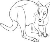 Kangaroo — Stock Vector