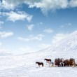 Horses on snow covered field — Stock Photo #2628143