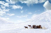 Horses on snow covered field — Stock Photo