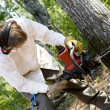 Man cutting down a tree - Stock Photo
