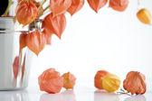 Orange Japanese lantern flowers — Stock Photo