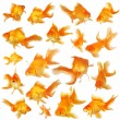 Collage of fantail goldfish — Stock Photo