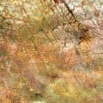 Multicolored rock background — Stock Photo #2659521