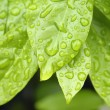 Water drops on plant leaf — Stock Photo