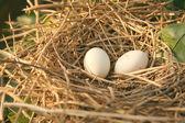 Isolated Bird's Nest — Stock Photo