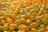 Scrumptious oranges! — Stock Photo