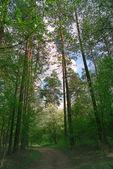Floresta de primavera. — Fotografia Stock