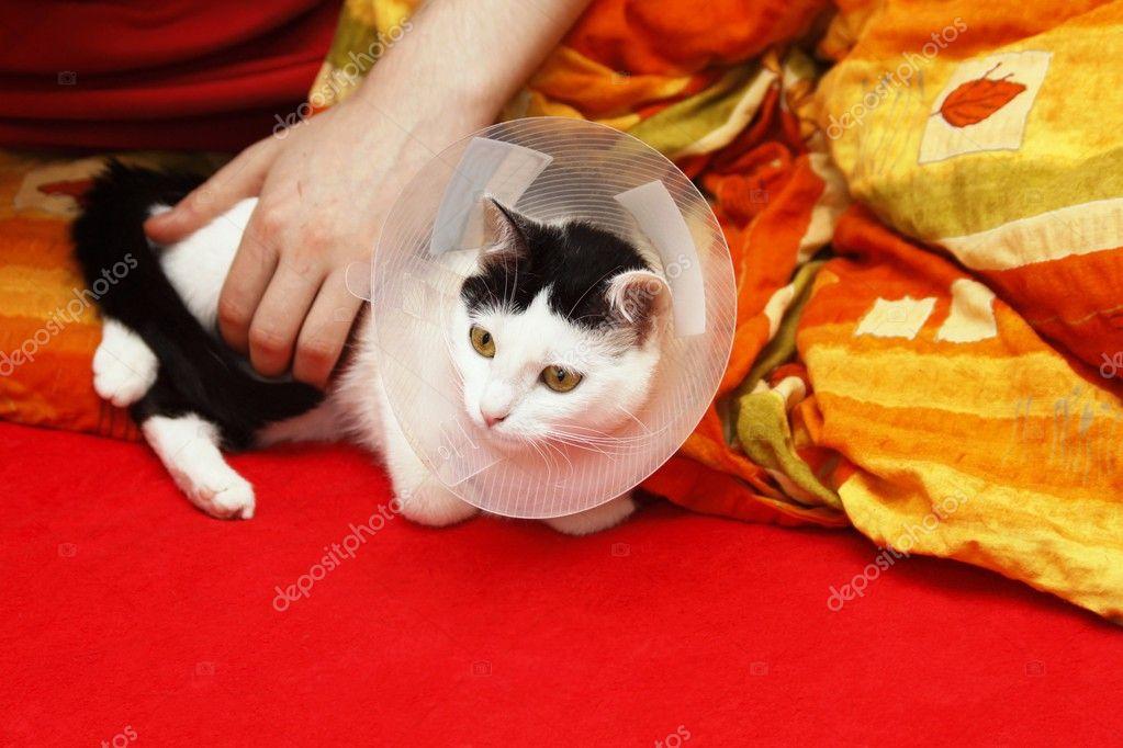как ухаживать за кошкой после кастрации видео