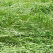 New-mown grass dries on  sun. — Stock Photo