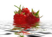 Berry raspberry in water. — Stock Photo