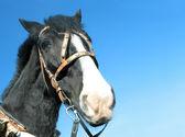 Kind horse. — Stock Photo