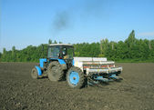 Tractor processes ground under crop. — Stock Photo