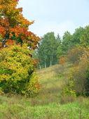 Autumn landscape — Stock Photo