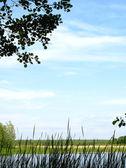 Estate. il fiume voronež. — Foto Stock
