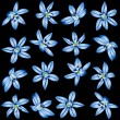 Stock Vector: Blue flowers on black background.