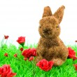 Brown rabbit at green grass — Stock Photo