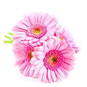 Bouquet pink gerber — Stock Photo
