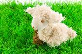 Lamb on green grass — Stock Photo