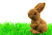 Bunny at green grass — Stock Photo