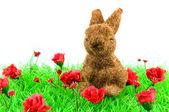 Brown rabbit at green grass — Stock Photo