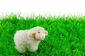 One sheep on green grass — Stock Photo