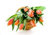 Wooden basket with orange tulips — Stock Photo