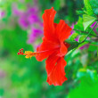 Stock Photo: Beautiful red flower