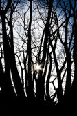 Sun between trees — Stock Photo