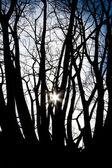 Sun between trees — Stock Photo