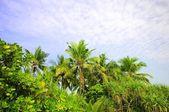 蓝蓝的天空背景棕榈 — 图库照片