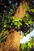 在热带森林的树干 — 图库照片