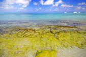 在海滩上的岩石 — 图库照片