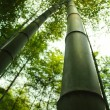 Stock Photo: Bamboo