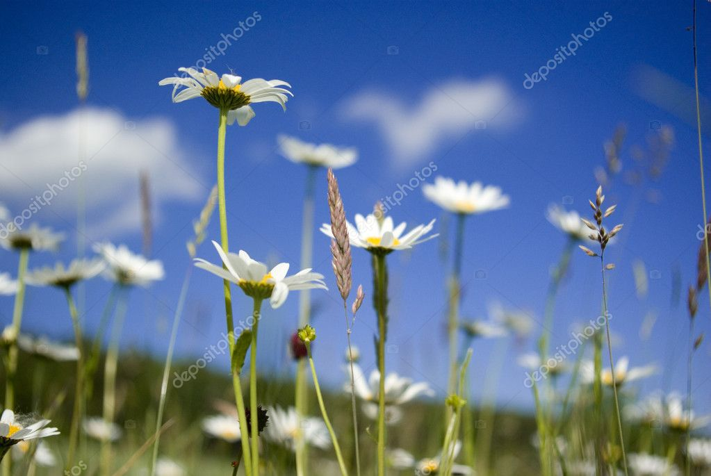 Grass — Stock Photo #2321590