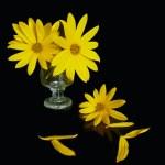 Yellow still-life — Stock Photo