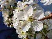 Spring colour — Stock Photo