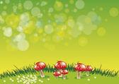 Fungi — Stock Photo