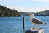 Salcombe Bay — Stock Photo