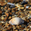 Shell on Beach — Stock Photo