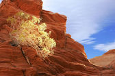 Sunlit bush in rock — Stock Photo