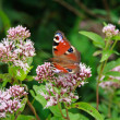Butterfly On The Flower — Stock Photo #2321102