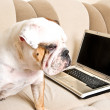 Stock Photo: English bulldog with notebook