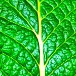 Leaf texture — Stock Photo #2411851