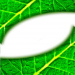 GREEN LEAF BACKGROUND — Stock Photo #2446364