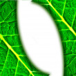 Green leaf background — Stock Photo #2446386