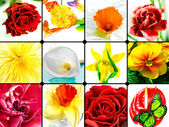 Colorful Floral Collage — Stock Photo