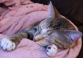 A cute sleeping kitten — Stockfoto