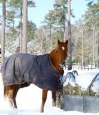 A horse in a snow covered field — Stockfoto