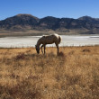 Stock Photo: Solitary Horse