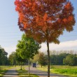 Red autumn tree — Stock Photo